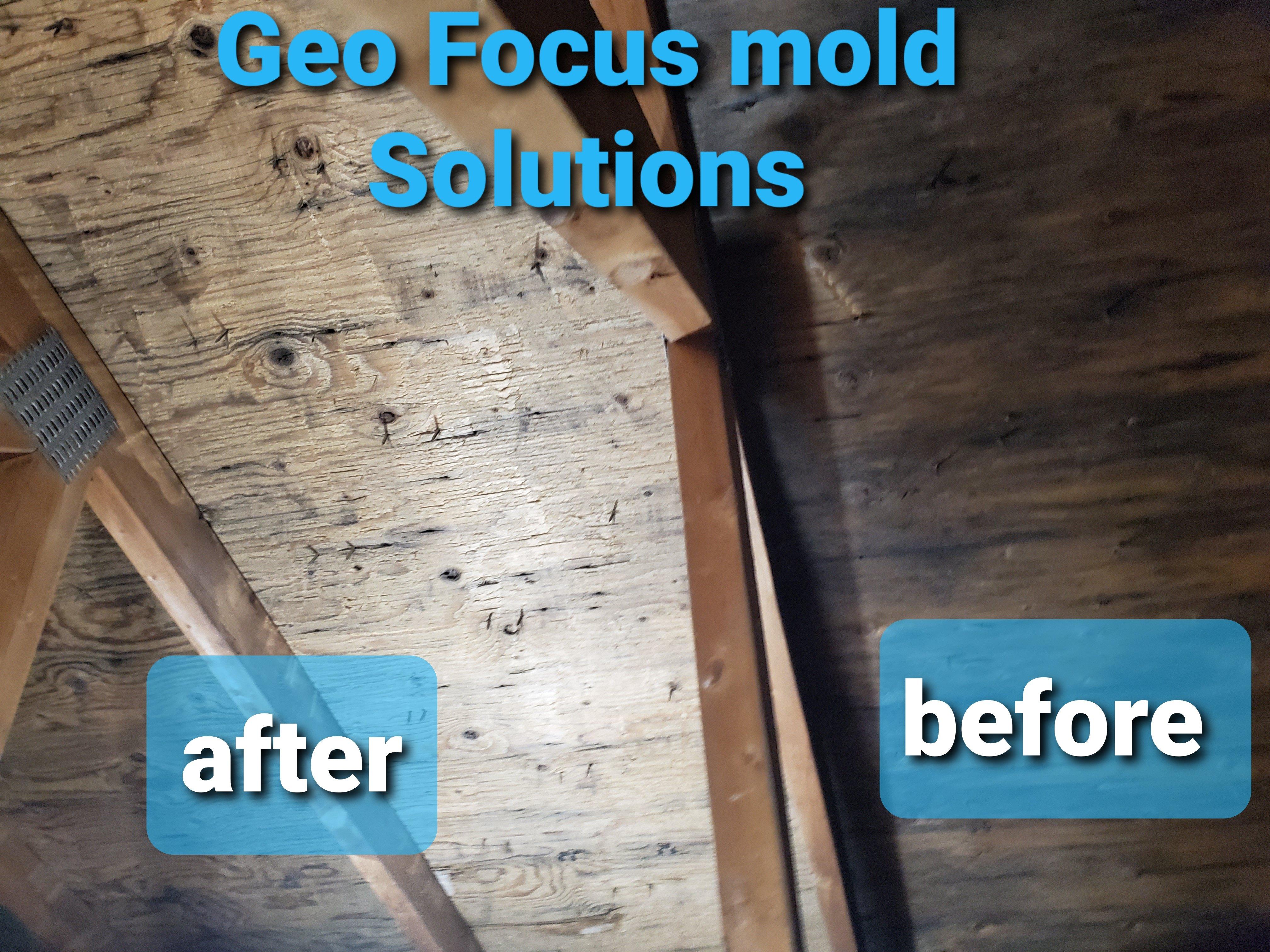 geofocus mold remediation